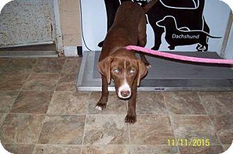 Labrador Retriever Mix Dog for adoption in Lewisburg, Tennessee - Dakotah