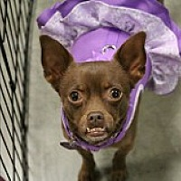 Adopt A Pet :: Frannie - Fountain Valley, CA
