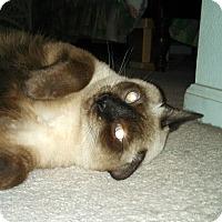 Adopt A Pet :: Maya - Scottsdale, AZ