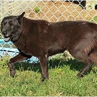 Adopt A Pet :: Blue - Key Biscayne, FL