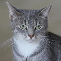 Adopt A Pet :: Nami - North Fort Myers, FL
