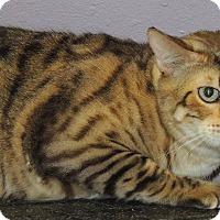 Adopt A Pet :: DIEGO - Joplin, MO