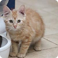 Adopt A Pet :: Finley - Millersville, MD