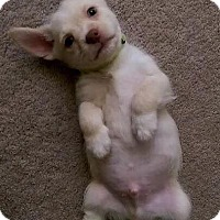 Adopt A Pet :: Mavi - ST LOUIS, MO