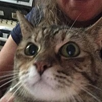 Adopt A Pet :: Phoebe - San Jose, CA