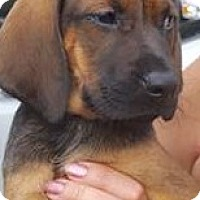 Adopt A Pet :: Dena - Brattleboro, VT