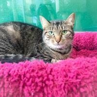 Adopt A Pet :: Mom - Wantagh, NY