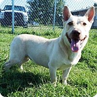 Adopt A Pet :: Anabelle - Terrell, TX