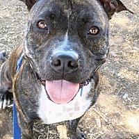 Adopt A Pet :: Jacey - San Diego, CA