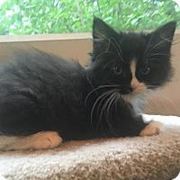 Adopt A Pet :: Melody - River Edge, NJ