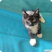 Adopt A Pet :: Pandy - Westchester, CA