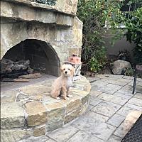 Adopt A Pet :: Hamlet - cupertino, CA