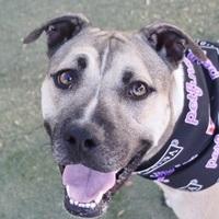 Adopt A Pet :: *SMOOCHES - Las Vegas, NV