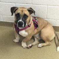 Adopt A Pet :: Troy - Miami, FL