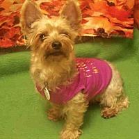 Adopt A Pet :: TAE' - Upper Marlboro, MD