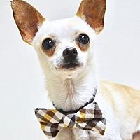 Adopt A Pet :: Scout - Dublin, CA