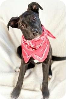 Labrador Retriever Mix Puppy for adoption in Nashville, Tennessee - Polly