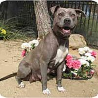 Adopt A Pet :: Prissy - Encino, CA