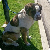 Adopt A Pet :: Olaf - Lake Forest, CA