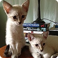 Adopt A Pet :: Cotton and Casper - Vero Beach, FL