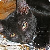Adopt A Pet :: Slash - Frederick, MD