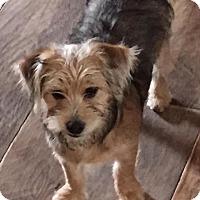 Adopt A Pet :: TABATHA - Salt Lake City, UT