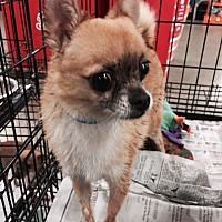 Adopt A Pet :: Ed - Fresno, CA