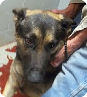 German Shepherd Dog Mix Dog for adoption in Silver City, New Mexico - Reyna