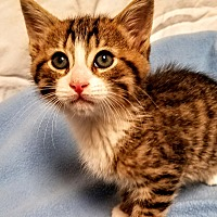 Adopt A Pet :: Logan-RC PetSmart - Rancho Cucamonga, CA