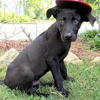 Adopt A Pet :: Spencer - Tyler, TX