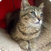 Adopt A Pet :: Tallie - Bloomsburg, PA