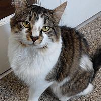 Adopt A Pet :: Wicket - Cloquet, MN