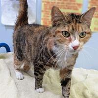 Adopt A Pet :: Magnolia - Indiana, PA