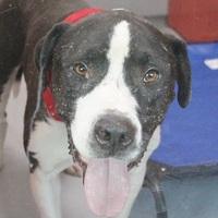 Adopt A Pet :: *KNARL - Las Vegas, NV