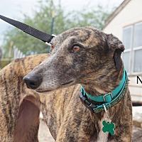 Adopt A Pet :: Nonna 2 - Tucson, AZ