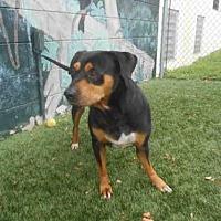 Adopt A Pet :: BUSTER - Winter Haven, FL