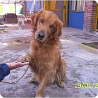 Adopt A Pet :: Buckley - Albuquerque, NM