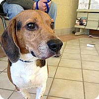 Adopt A Pet :: Wrigley - Indianapolis, IN
