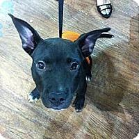 Adopt A Pet :: Pandora - Lake Worth, FL