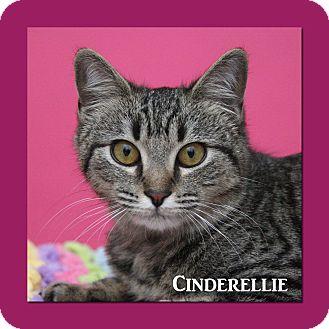 Domestic Shorthair Cat for adoption in Aiken, South Carolina - Cinderellie