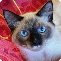 Adopt A Pet :: Loti -Adoption Pending! - Colmar, PA