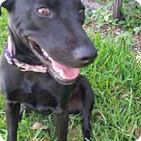Adopt A Pet :: Tequila - Miami, FL