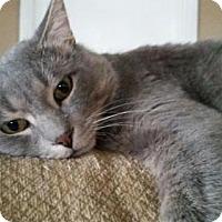 Adopt A Pet :: Nugget - Orange, CA