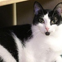 Adopt A Pet :: Lacy K - Raleigh, NC