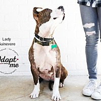 Adopt A Pet :: Lady Guinevere - West Los Angeles, CA