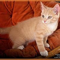 Adopt A Pet :: Logo - Cincinnati, OH