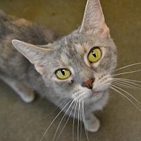 Adopt A Pet :: Delilah - Akron, OH