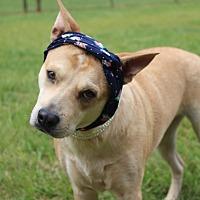 Adopt A Pet :: Bella - Fort Valley, GA