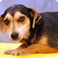Adopt A Pet :: Shenia - Maynardville, TN