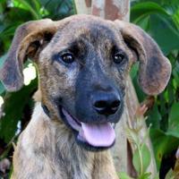 Adopt A Pet :: Bo - Tyler, TX